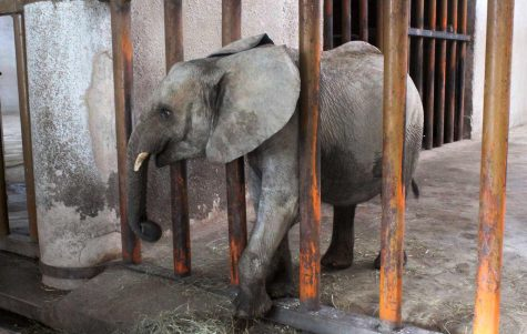 Elephant Cruelty in Zimbabwe